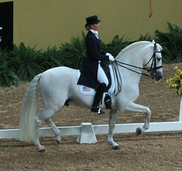 caballo andaluz