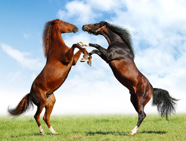 encelada de caballos