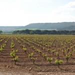 viñas vega sicilia