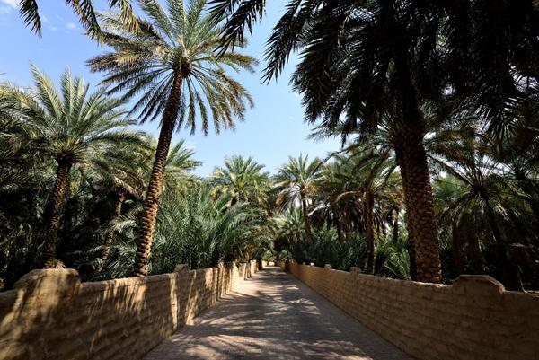 al-ain-oasis