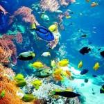 Marsa Alam, turismo de lujo y aventura