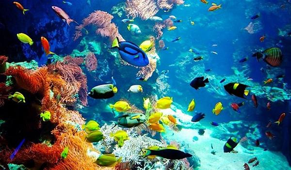 Fauna Flora Mar Rojo Estilos De Vida Estilos De Vida