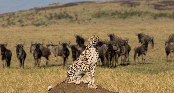 Mahali_mzuri_safari