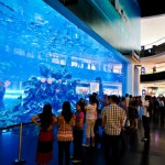 Shopping-Mall-Dubai-con-Acuario-y-Zoo-Submarino