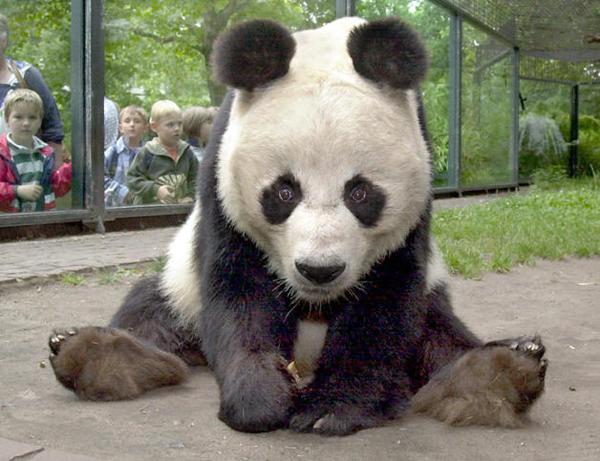 18-diciembre-2010 osos-pandas_detalle