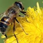 Veneno de abejas para el cutis