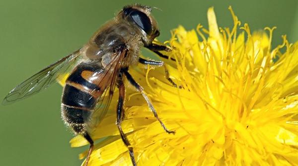 Aplicaciones-del-veneno-de-abeja-en-belleza1