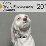 Sony premia a las mejores fotos del 2015