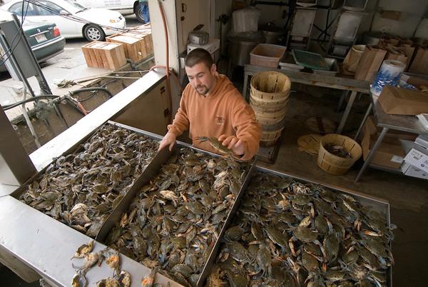 Maine ave fish market washington dc estilos de vida for Maine fish market