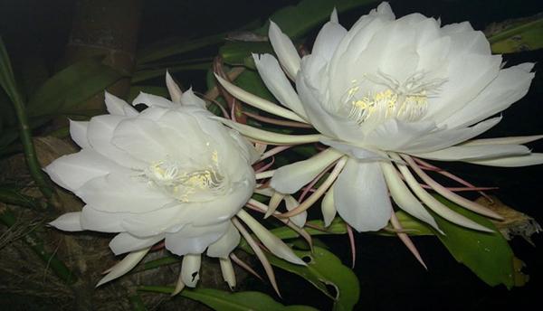 Las Flores Mas Lujosas Para Regalar Estilos De Vida Estilos De Vida