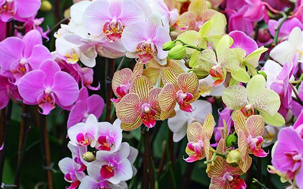 orquideas varias
