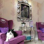 Hoteles de lujo para gatos