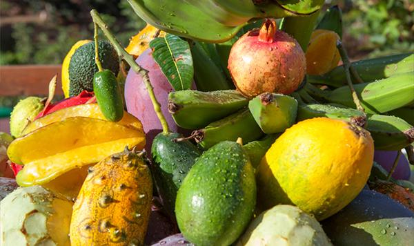 mangos-aguacates-chirimoyas