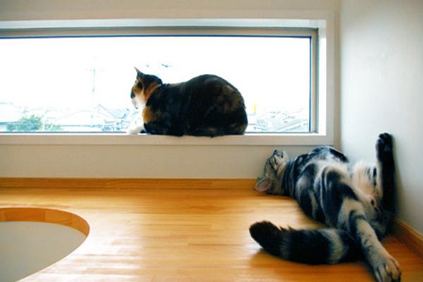 casas-gatos-cathouse-keyoperation-catwindow