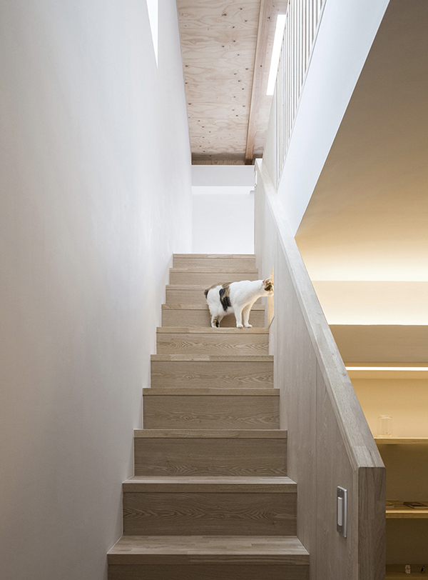 casas-gatos-dodo-kei-harada-house-is-gato-02