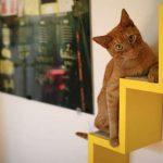 Casas de lujo para gatos y sus amos