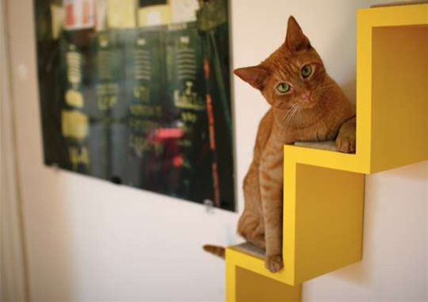 casas-gatos-playground-ultimate-indoor-fun-for-cats