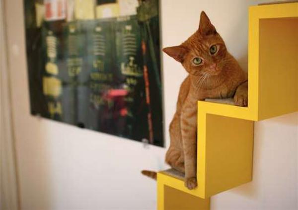 casas-gatos-playground-ultimate-indoor-fun-for-cats