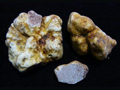 Nuevas especies de trufas descubiertas en Tailandia
