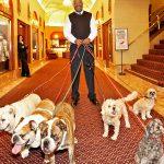 Los hoteles para perros más lujosos del mundo